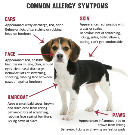 Dermatology And Allergies Veterinarian In Raleigh Nc